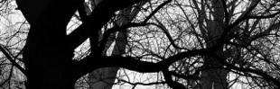 Kasztanki - Fotoblog: Las łęgowy / Riparian forest