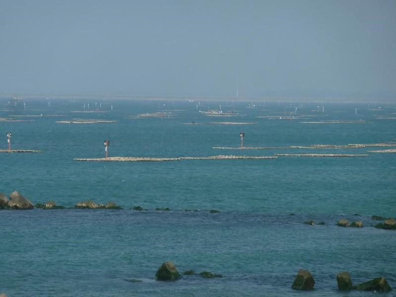 台南市以浮棚養殖牡蠣的主要有三區,分別有安南、安平及南區。圖片來源:晁瑞光