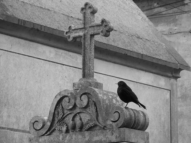Pájaro negro sobre una tumba en el Cementerio de los Placeres de Lisboa