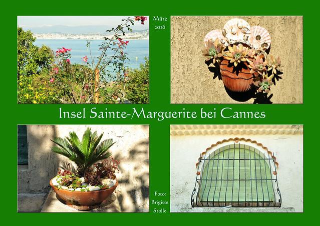 """Man kann nicht alles in einen kleinen 1-wöchigen Côte d'Azur-Urlaub hineinpacken. Die zweitgrößte der Lerins-Inseln, die Île Saint-Honorat, hätte ich auch noch gerne besucht. Es gibt dort heute noch ein Kloster mit circa 30 Mönchen, Weinberge, Kapellen – und man kann im Klosterladen den bekannten Klosterlikör Lérina kaufen.  Wir waren auf der großen Insel Sainte-Marguerite, wo es gar nichts zu kaufen gibt. Die wenigen Restaurants sind um diese frühe Jahreszeit geschlossen; es sind einfach noch zu wenig Touristen da. Dafür gibt es neben dem Fort Royal (früher Gefängnis für """"hochkarätige"""" Gefangene, z. B. Dumas """"Mann mit der eisernen Maske"""") nebst einem """"Musée de la mer"""" vor allem eines: gaaanz viel Natur, ruhige kleine Buchten, Pinien, Eukalyptusbäume, Acanthus mollis (""""Wahrer Bärenklau"""") in unglaublichen, inselüberwuchernden Massen (wie sieht das wohl zur Blütezeit im Mai/Juni aus?), Blumen, Insekten, Vögel … Stundenlang könnte man im Wald und am Meer spazieren gehen, ohne auf Menschen zu treffen. Ein paar Leute wohnen hier sogar, gesehen hat man kaum jemanden. Während in den Sommermonaten wahre Völkerschaften übers Meer setzen und auf der Insel einfallen, ist es Anfang März ganz ruhig und idyllisch. Ein schönes Naturerlebnis! Foto Brigitte Stolle März 2016"""
