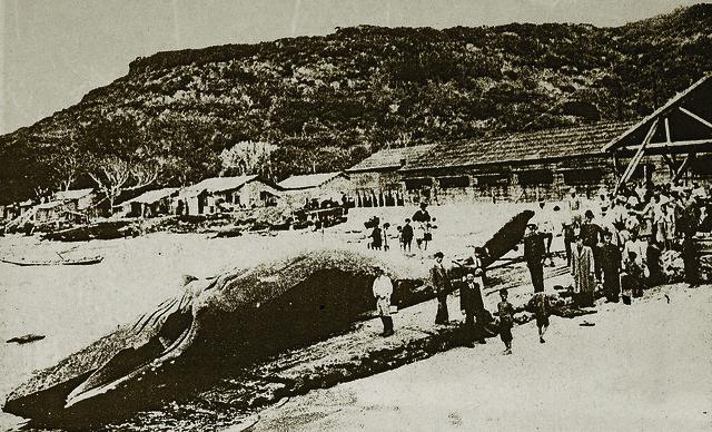 大板埒捕鯨場。圖片來源:墾丁國家公園管理處