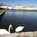Nymphenburg swans