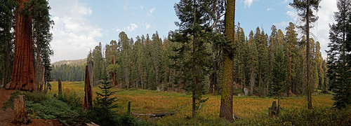 Log meadow in Giant Forest, Sequoia National Park