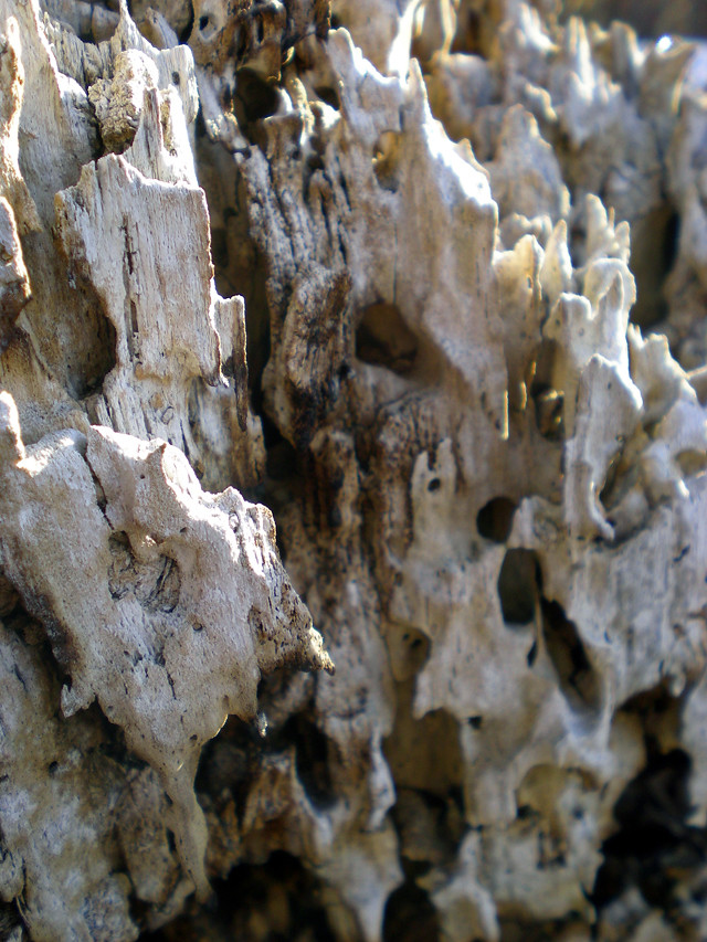 macro tree stump