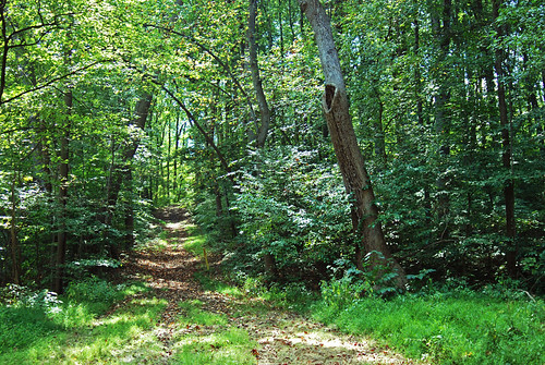 Wooded conservation easement near Fort Washington