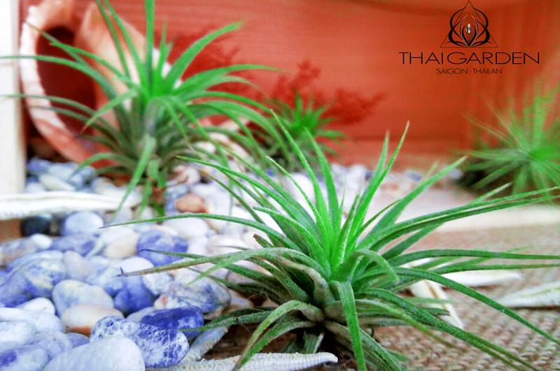 art plant | cay khong khi | tieu canh khong khi | terrarium