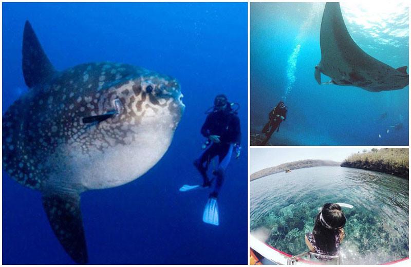 Penida Diving