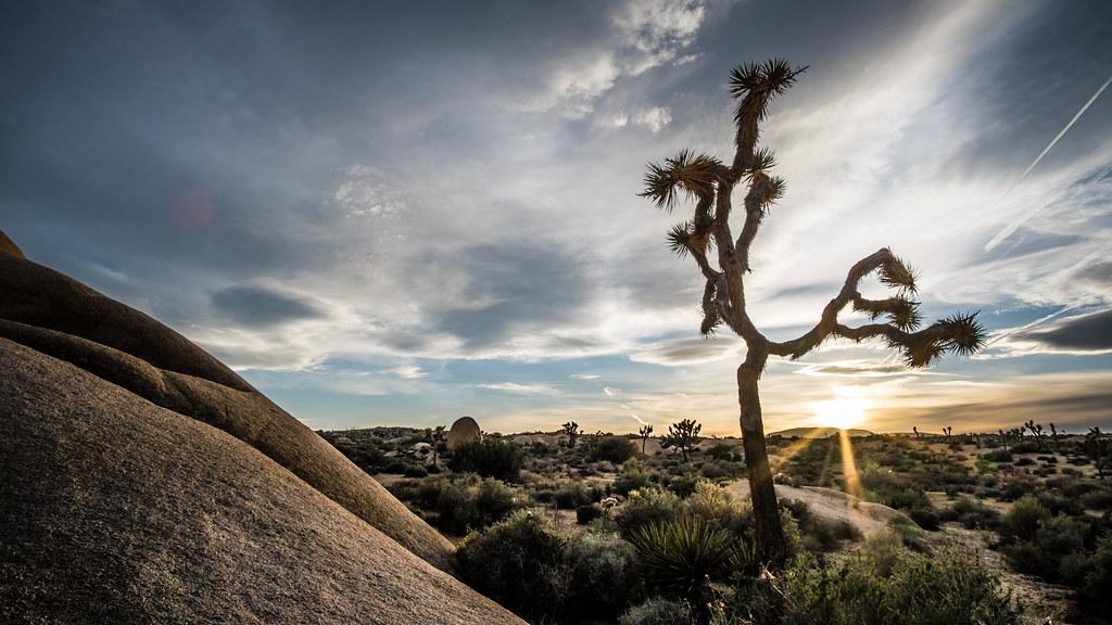 Joshua Tree National Park California United States Tr