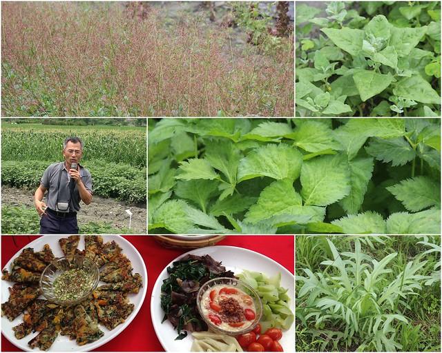 花蓮場野菜種植重要推手是作物改良課副研究員全中和。攝影:廖靜蕙