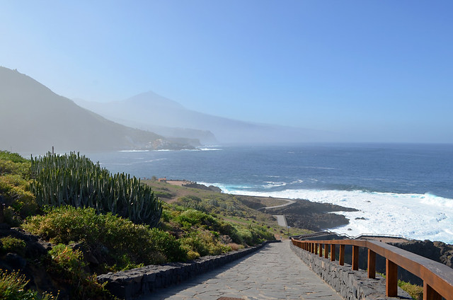 Cardon, Acentejo, north coast, Tenerife