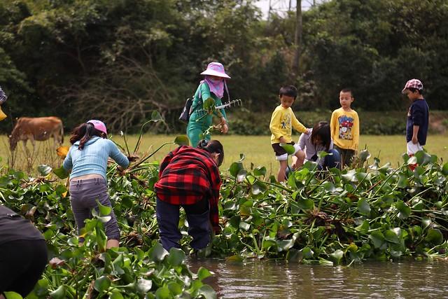 在海南省海口線依傍濕地的那央村,舉辦移除外來種水葫蘆的志工活動。