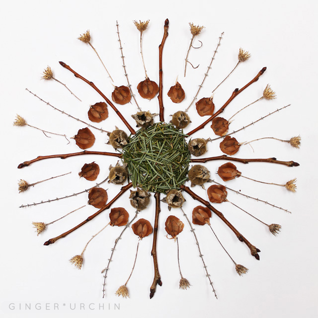 new moon plant mandala medicine wheel