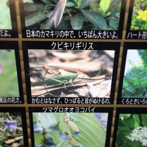 中目黒公園 2015.12.26