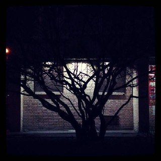 It's the tree that grows darkness. For #365days project, 43/365