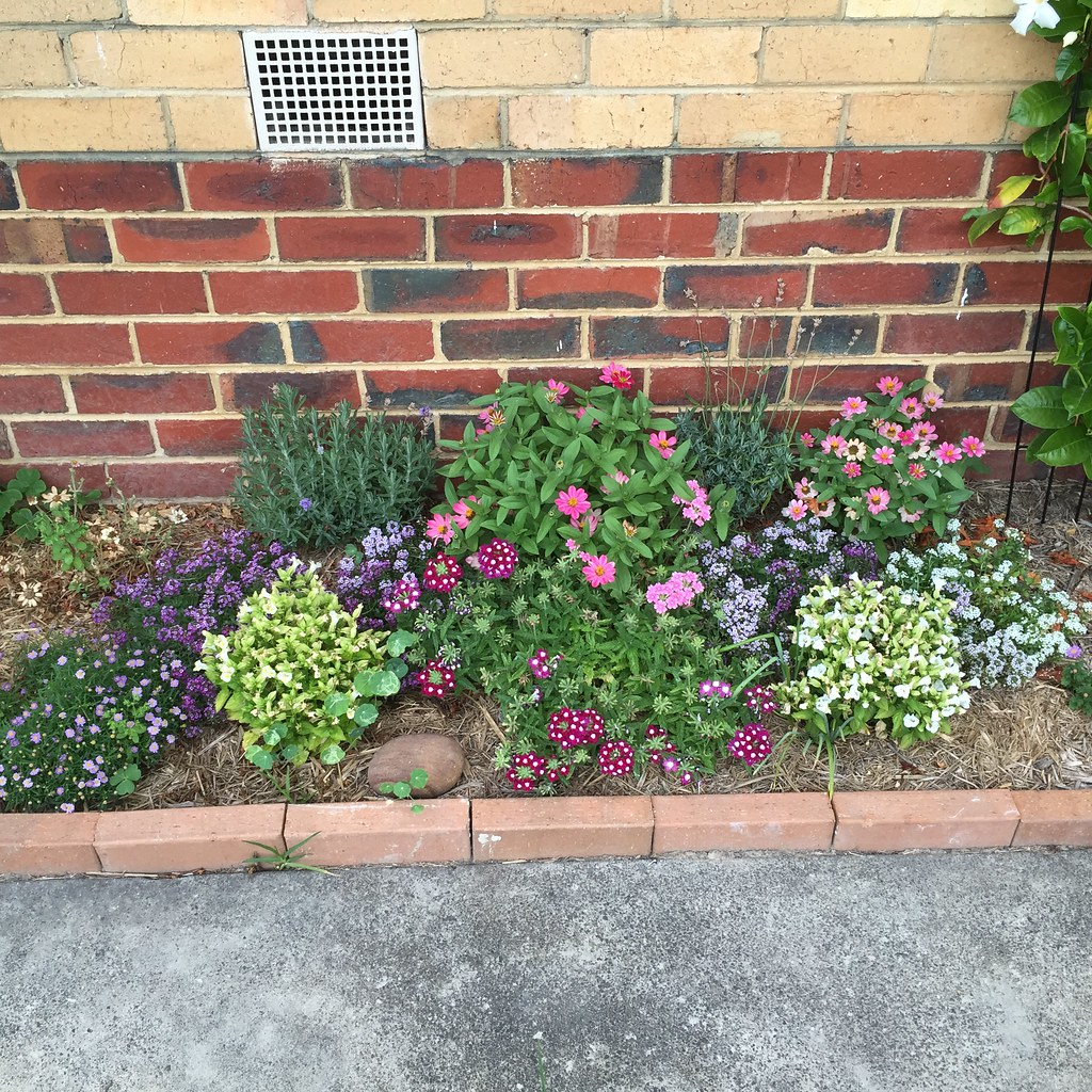 a variety of floral plants growing together