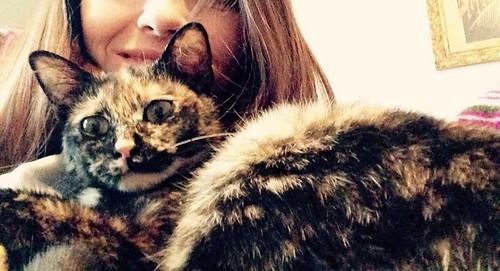 Sunny, preciosa gatita Carey mimosona y muy buena esterilizada, nacida en Septiembre´15, en adopción. Valencia. FALLECIDA. 25926277873_4941fc8685