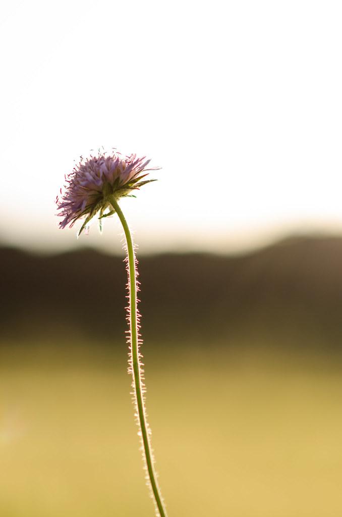 Golden lined flower