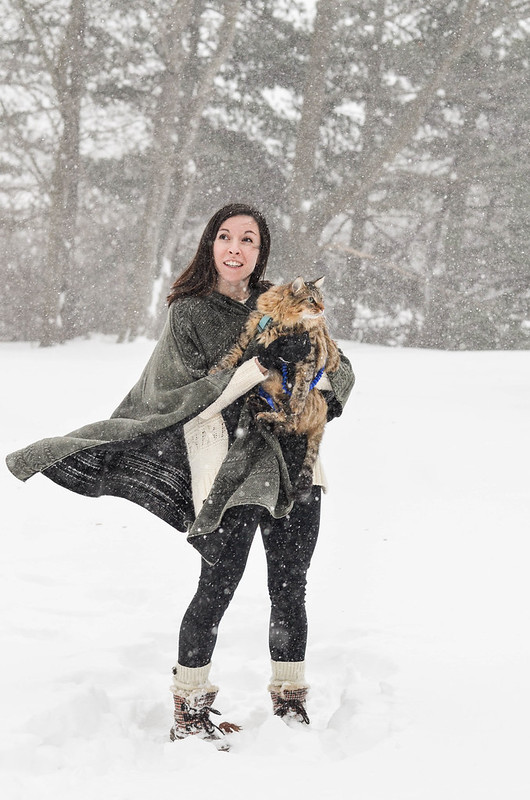 Morty the Maine Coon in Snow   cookingalamel.com