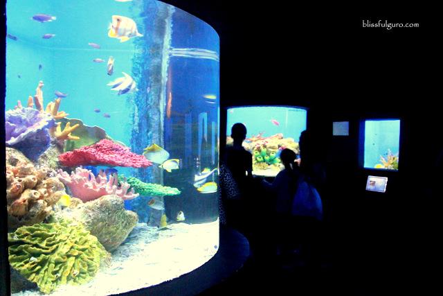 Manila Ocean Park Oceanarium
