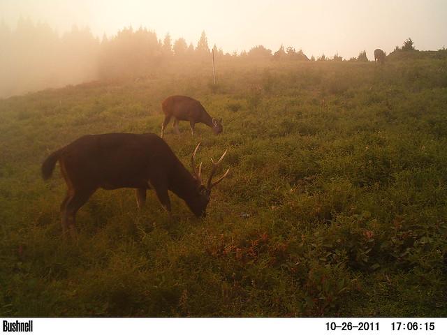 海拔越高、離道路越遠,水鹿棲息適合度越高。圖片來源:顏士青