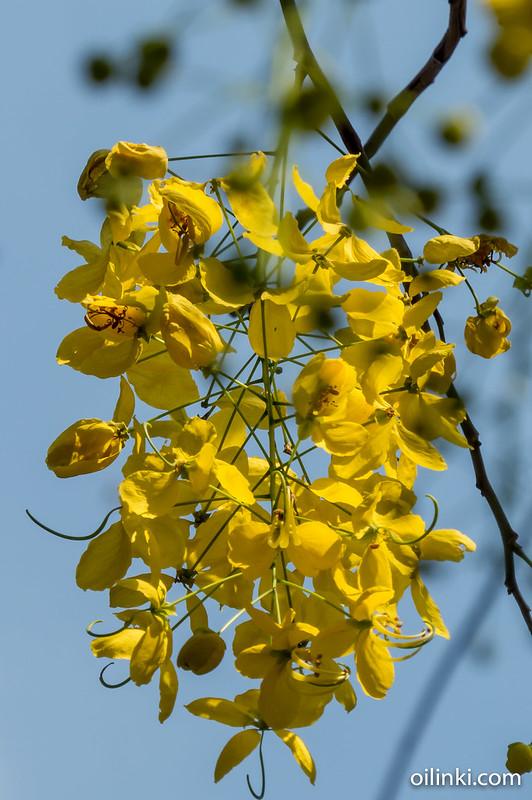 Flowers at Lumpini park