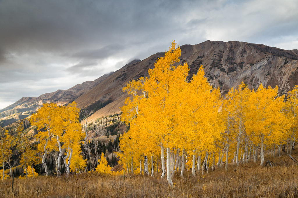 Nebo Gold These Were Some Of The Golden Aspens On