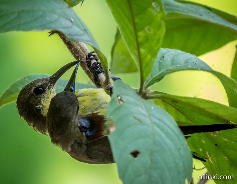 Sunbird couple deciding next location as mutual agreement