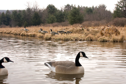 Photo of waterfowl hunting
