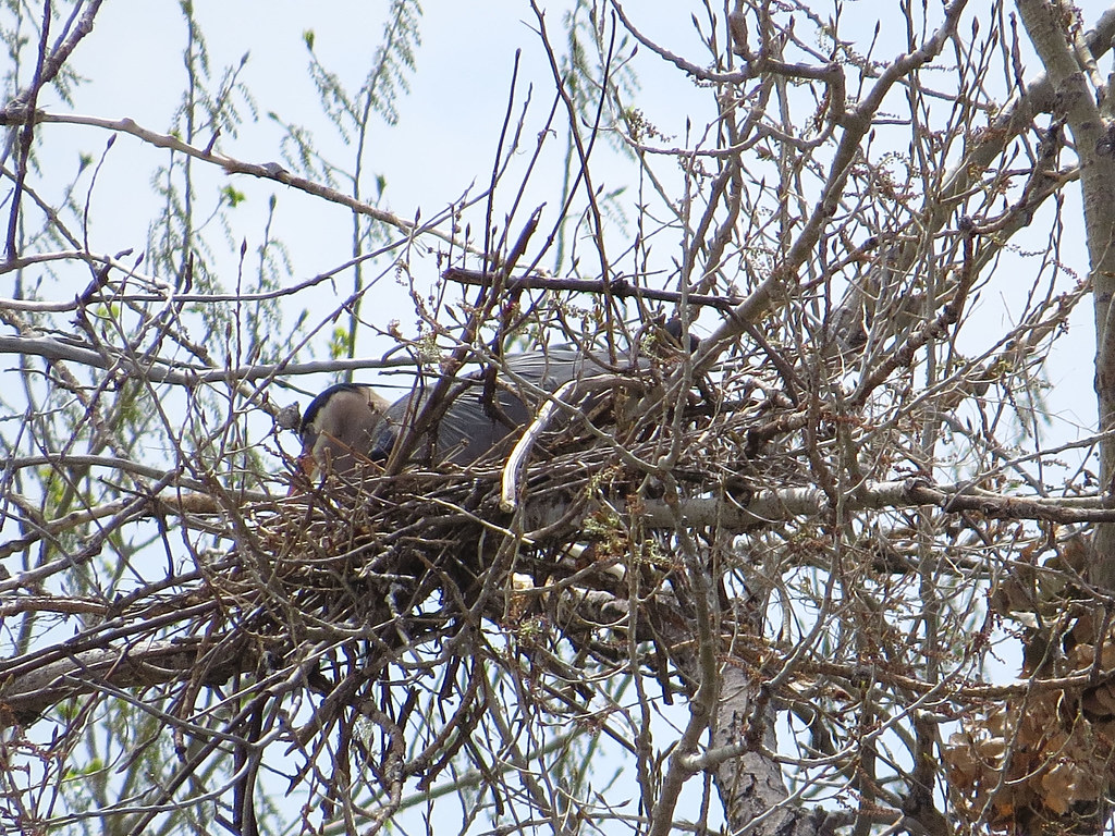 Herons Nest Nature Park