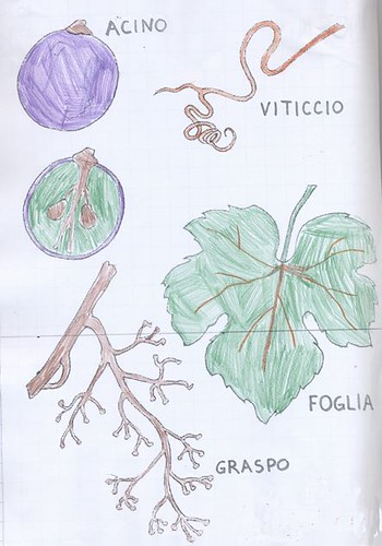 disegni dei bambini