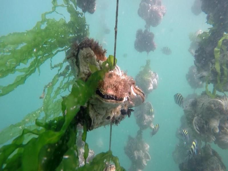 蚵架下的生態豐富性極具觀光價值。圖片來源:晁瑞光