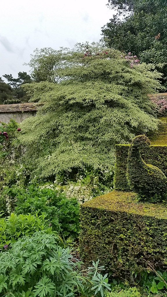 topiary bird and greens