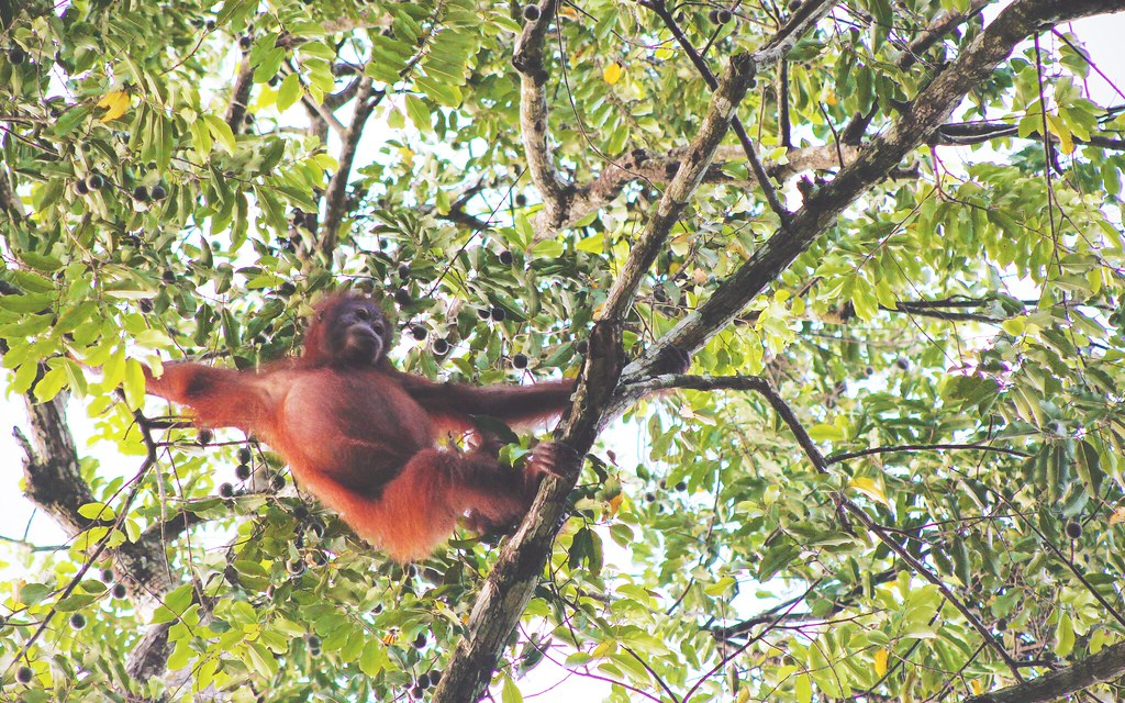 Laat jouw vakantie niet het leven van een dier verpesten | via It's Travel O'Clock