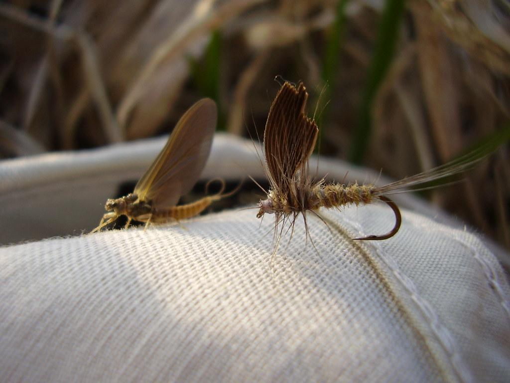 Ontario Fly Fishing