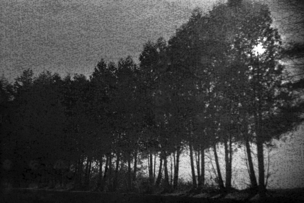 Treeline   by LowerDarnley