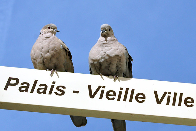 Côte d'Azur Monaco, März 2016. Palais - Vieille Ville. Zwei Turteltäubchen. Foto: Brigitte Stolle März 2016