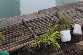 為浮台裝翅膀!這是為了測試各種植物與水質的關聯性。攝影:廖靜蕙
