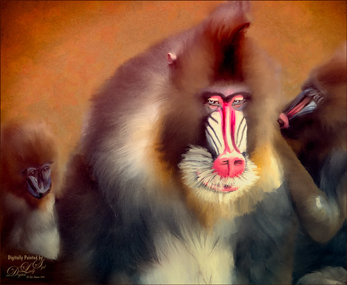 Image of a Mandrill at the Jacksonville Zoo