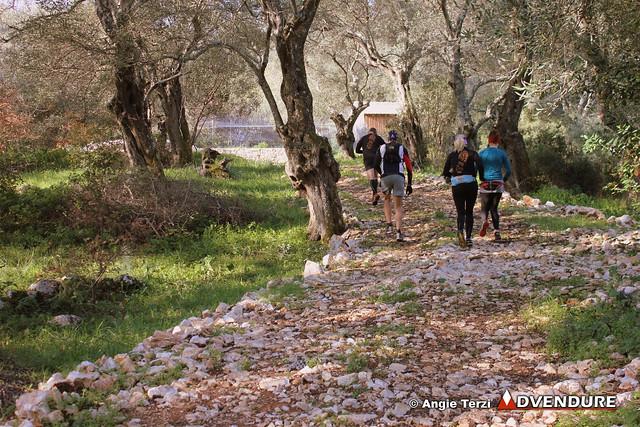 Τρέξιμο μέσα στην εξοχή και τους ελαιώνες με τα θεόρατα δέντρα, στα πρώτα χιλιόμετρα της διαδρομής!