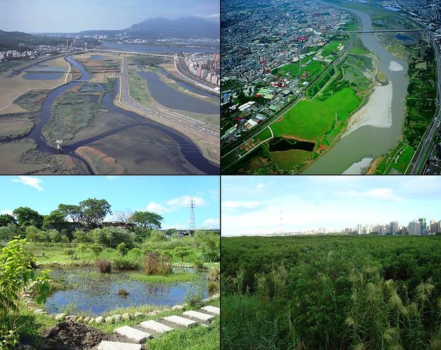 淡水河流域生態資源豐富。左上:五股濕地;右上:鹿角溪、城林、打鳥埤濕地;左下:新店溪福和橋濕地;右下:竹圍紅樹林。圖片提供:賴榮孝。