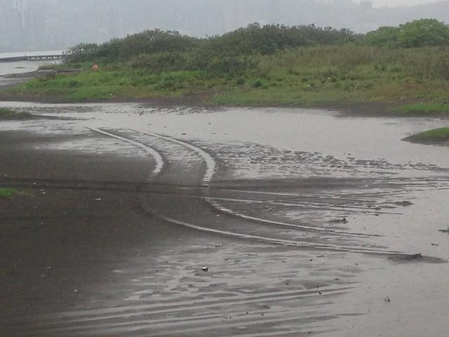 不知是誰的車,就這樣蜿蜒開進東方環頸鴴的育雛棲地。攝影:廖靜蕙