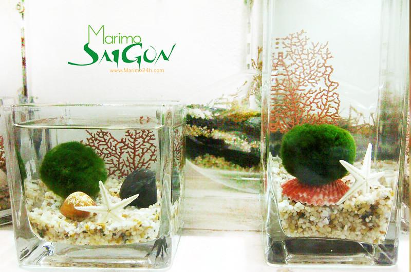 marimo | marimo sai gon | marimo aquarium | ban si marimo | ban marimo toan quoc | chau thuy tinh | phu lieu
