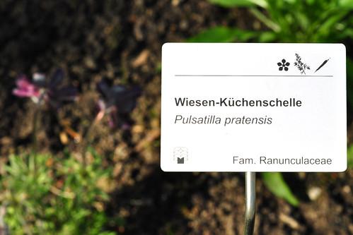 Den Luisenpark Mannheim erreichen wir von zu Hause aus mit dem Auto in maximal 15 Minuten. Es ist also kein großer Aufwand, diesen wunderschönen Park mindestens 1 x pro Monat zu besuchen. Dabei schaue ich auch immer nach, was sich im Heilpflanzengarten tut. Bei meinem Besuch im April wurde gerade fleißig gärtnerisch gearbeitet. Einige Pflanzen waren bereits am Blühen. Fotografiert habe ich im und rund um den Heilpflanzengarten folgende Exemplare: Zypresse - Wiesen-Küchenschelle - Berberitze - Mahonie - Waldmeister - Rosmarin - Weiße Taubnessel - Mariendistel - Andorn - Hopfen - Latschenkiefer. Jetzt wäre auch noch interessant, welche Pflanze wofür oder wogegen gut ist - aber das ist wieder eine andere Geschichte. Fotos: Brigitte Stolle April 2016