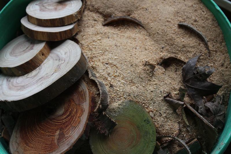 善加利用清理的枯枝倒木所剩的木削,煙燻來驅趕蚊蟲。攝影廖靜蕙