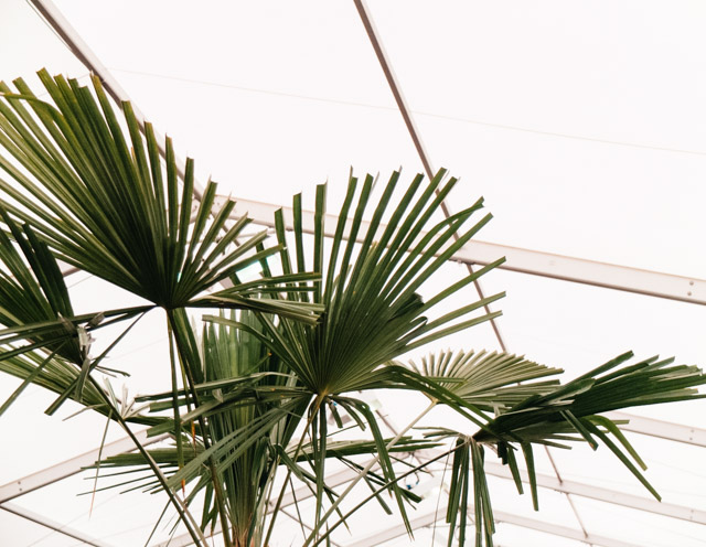 palm leaves in greenhouse