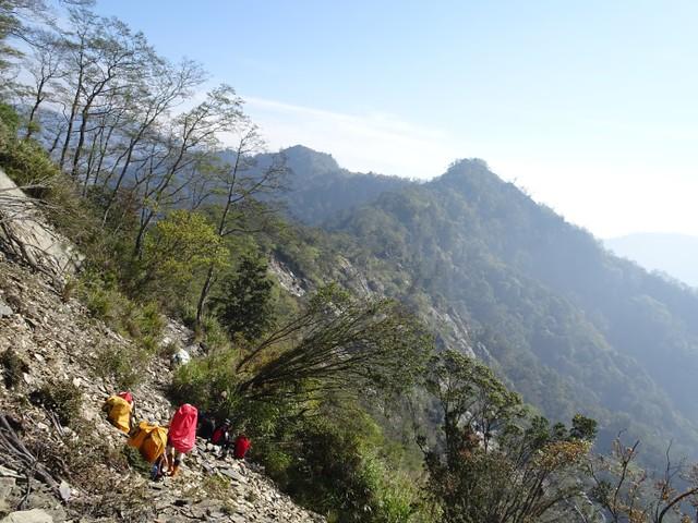 歡喜山稜線帶分布臺灣扁柏。圖片來源:屏東林區管理處