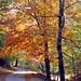 C'era una volta una strada nel bosco - once upon a time, a road in the woods ...