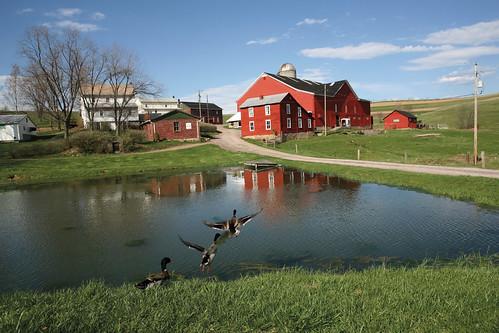 Mar-Bil Jersey Farm's red barn
