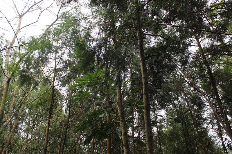 台灣私有林136,555公頃公頃,林農平均擁有的林地都在3公頃以下,獨立而分散,難以擁有經濟規模,因此建議朝精品化發展。攝影:廖靜蕙。