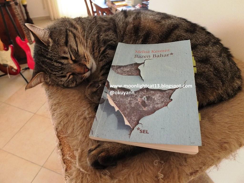 Bir kedi ne düşler yaşıyor